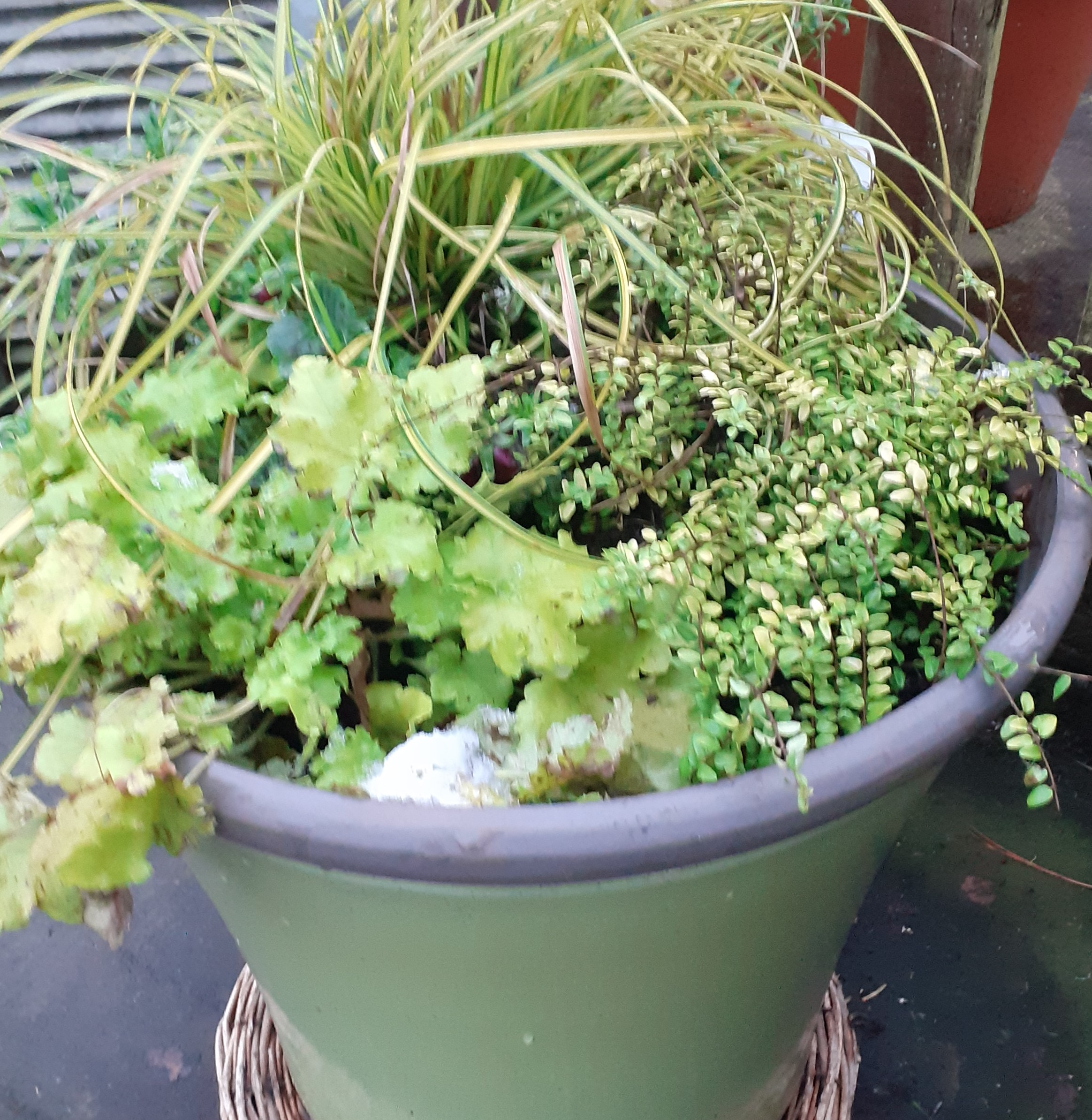 Green_Pot_Winter_Planter_resized.jpg